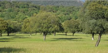 Purchase of large rural property in Spain